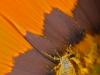 Impollinazione|Pollination