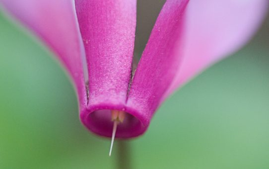 I fiori del sottobosco