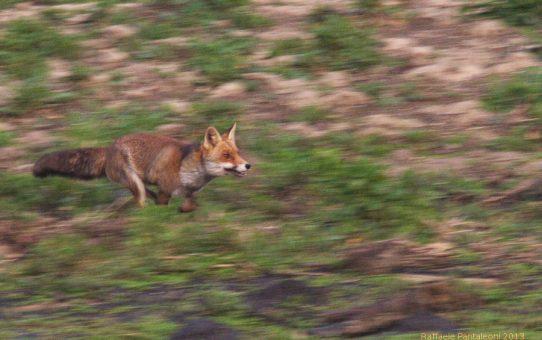 """Dietro la foto – """"On the run"""""""